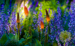 June 19 Speaker: Garden Photographer Rob Cardillo