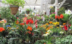Sorry you missed: Garden Talk and Farmer's Market at Ballek's Garden Center