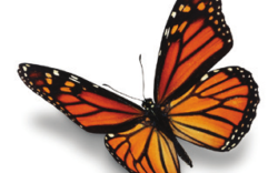 Sorry you missed: Monarch Butterfly Workshop – Saturday, August 26