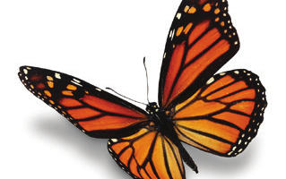 Monarch Butterfly Workshop – Saturday, August 26