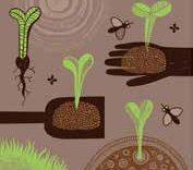 Wednesday, July 25 Seed Collection Workshop at O'Brien Nursery in Granby
